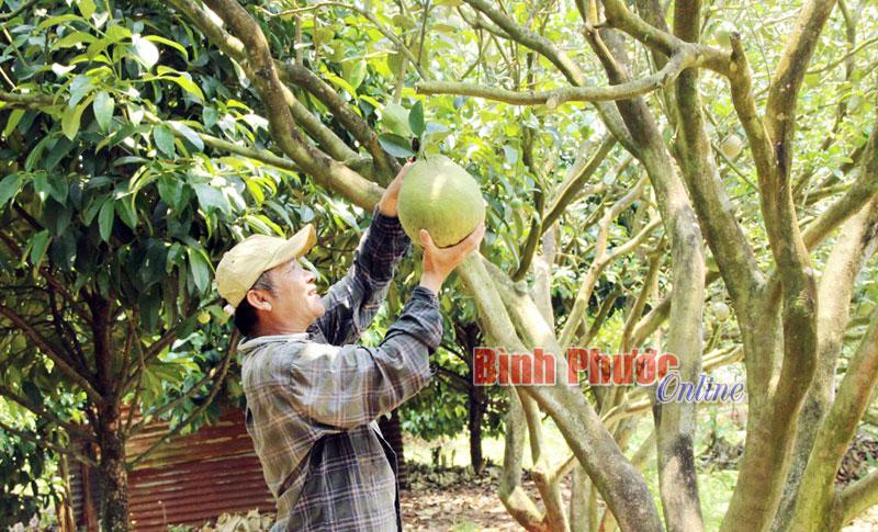 Nông dân Phước Long hướng đến sản xuất ứng dụng công nghệ cao
